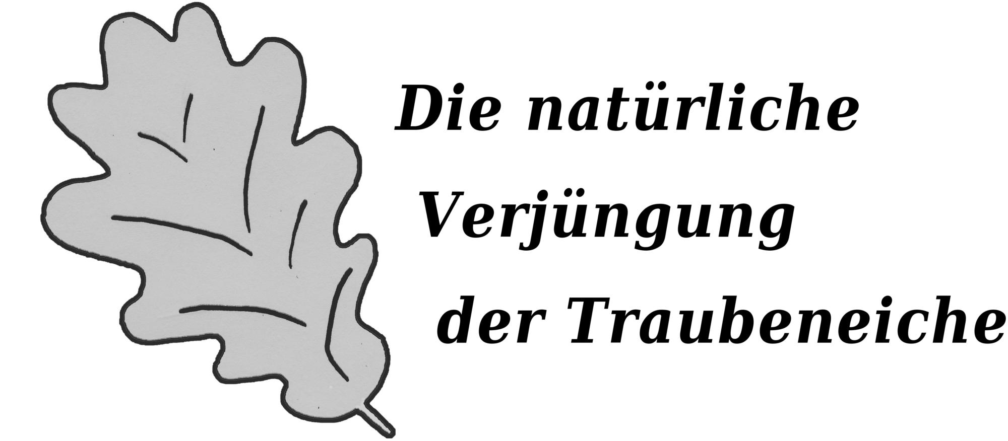 Tobias-Modrow-Freiburg-Traubeneiche-Eiche-Eicheln-Mastjahr-Naturverjuengung-Verjuengung-Spessart-Pfaelzerwald-Brandenburg-Ludwigsburg-Karlsruhe-Main-Tauber-Kreis-Wachstum-Licht-Alter-Standort-Photosynthese-Lichtflecken-Konkurrenz-Buche-Hainbuche-Brombeere-Pionierbaumarten-Lichtsteuerung-Schirmschlag-Ueberhaelter-Altbaeume-Grundflaeche-Abstand-Kronendachoeffnung-Kronenschlussgrad-Lochhieb-Durchmesser-Groesse-Pflegemassnahmen-Knicken-Wildverbiss-Verbissschutz-Zaun-Jagd-Handlungsempfehlungen-Naturschutz-Habitatbaeume-Hirschkaefer-KlimaQuer-Waldklimafonds-Waldbau-Publikationen-AFZ-Literatur